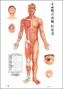 meridiani-agopuntura-213x300