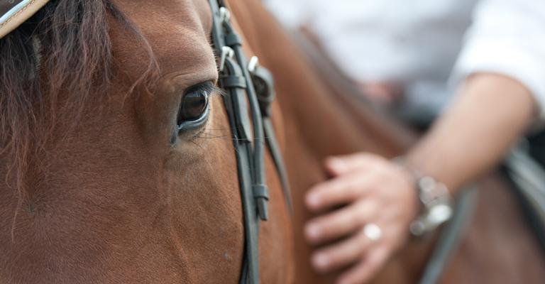 rqi e cavalli da gara